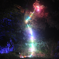 Colored light in a tree
